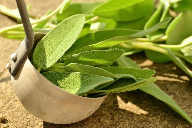 Szałwia - pobudza soki trawienne i leczy ból gardła